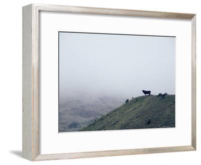 Lone Bull on Hill in Fog-Steve Winter-Framed Photographic Print