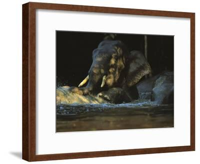 A Borneo Asian Elephant Splashes in a Shady River-Tim Laman-Framed Photographic Print