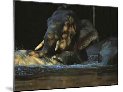 A Borneo Asian Elephant Splashes in a Shady River-Tim Laman-Mounted Photographic Print