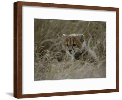 Close View of a Juvenile Cheetah in a Grassy Landscape-Roy Toft-Framed Photographic Print