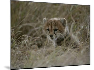 Close View of a Juvenile Cheetah in a Grassy Landscape-Roy Toft-Mounted Photographic Print