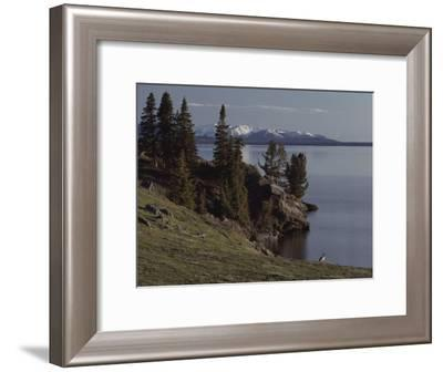 A Scenic View of Yellowstone Lake with a Canada Goose on the Shore-Tom Murphy-Framed Photographic Print