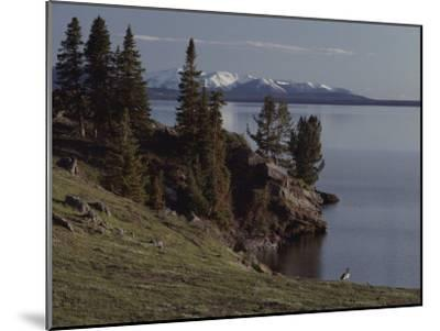 A Scenic View of Yellowstone Lake with a Canada Goose on the Shore-Tom Murphy-Mounted Photographic Print