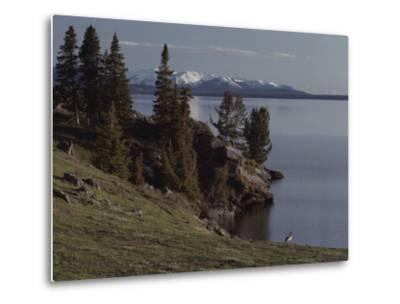 A Scenic View of Yellowstone Lake with a Canada Goose on the Shore-Tom Murphy-Metal Print