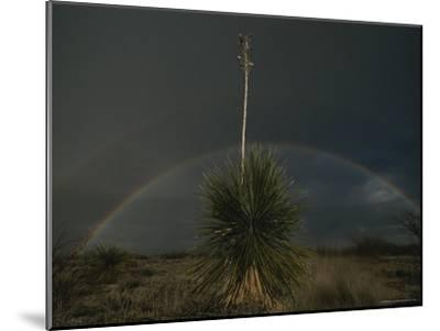 A Double Rainbow Arcs over a Spanish Bayonet Yucca Plant-Annie Griffiths-Mounted Photographic Print