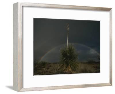 A Double Rainbow Arcs over a Spanish Bayonet Yucca Plant-Annie Griffiths-Framed Photographic Print