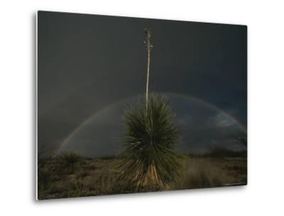 A Double Rainbow Arcs over a Spanish Bayonet Yucca Plant-Annie Griffiths-Metal Print