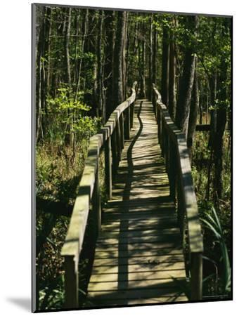 An Elevated Board Walkway Crosses a Marshy Spot in a Forest-Raymond Gehman-Mounted Photographic Print