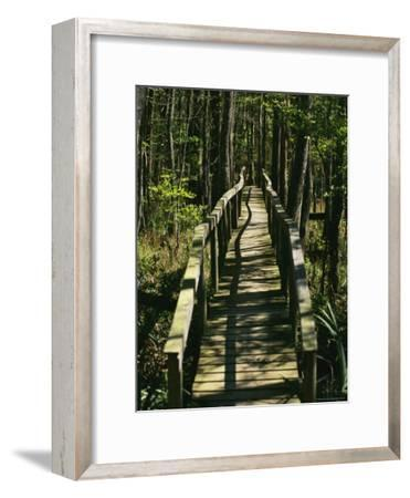 An Elevated Board Walkway Crosses a Marshy Spot in a Forest-Raymond Gehman-Framed Photographic Print