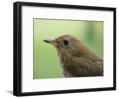 A Close View of the Head and Shoulders of a Wren-Bill Curtsinger-Framed Photographic Print