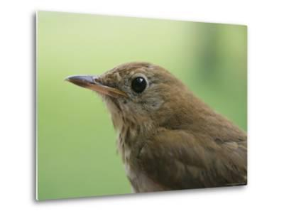 A Close View of the Head and Shoulders of a Wren-Bill Curtsinger-Metal Print