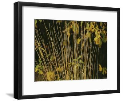 A Close View of Sedges-Raymond Gehman-Framed Photographic Print