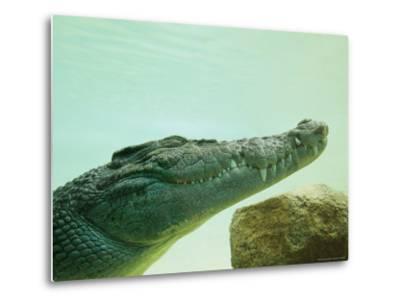 An Estuarine Saltwater Crocodile Underwater with Eyes and Jaw Shut-Jason Edwards-Metal Print