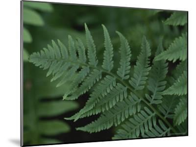Close-up of a Fern-Stephen Alvarez-Mounted Photographic Print