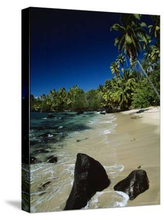 Water Surging onto a Palm Tree-Lined Beach-Tim Laman-Stretched Canvas Print