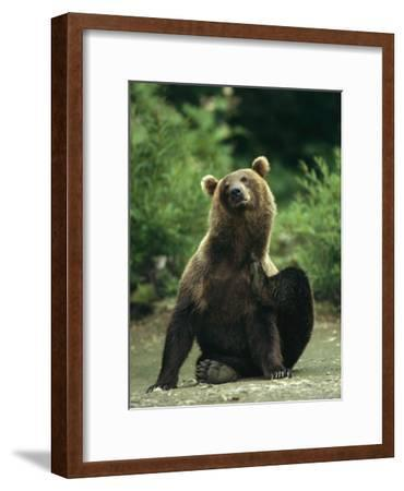 A Brown Bear Scratching an Itch-Klaus Nigge-Framed Photographic Print