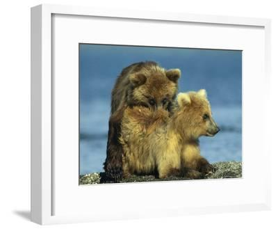 A Brown Bear Cubs Resting on a Sand Bar in a River-Klaus Nigge-Framed Photographic Print