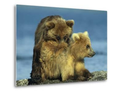 A Brown Bear Cubs Resting on a Sand Bar in a River-Klaus Nigge-Metal Print