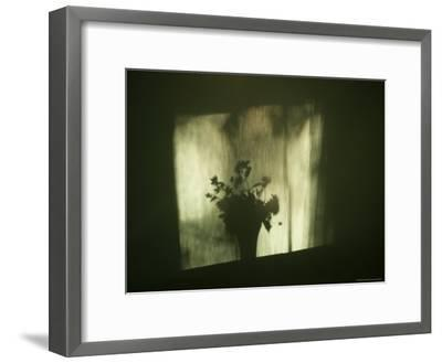 A Shadow of a Vase of Flowers Falls on a Wall-Stephen Alvarez-Framed Photographic Print