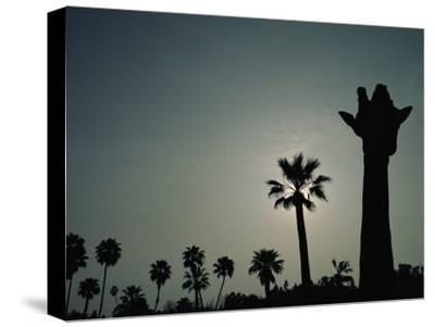 A Silhouette of a Giraffe at the San Diego Wild Animal Park-Michael Nichols-Stretched Canvas Print