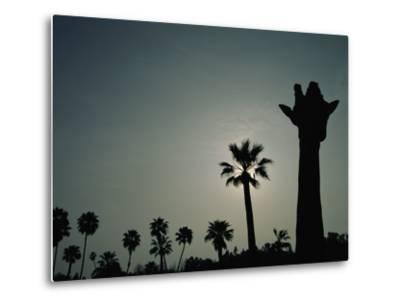 A Silhouette of a Giraffe at the San Diego Wild Animal Park-Michael Nichols-Metal Print