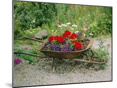 View of an Old Wheelbarrow Used for Summer Flowers-George F^ Mobley-Mounted Photographic Print