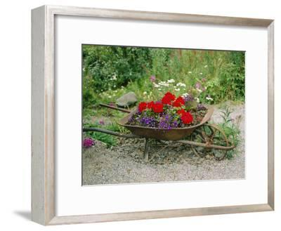 View of an Old Wheelbarrow Used for Summer Flowers-George F^ Mobley-Framed Photographic Print