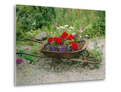 View of an Old Wheelbarrow Used for Summer Flowers-George F^ Mobley-Metal Print