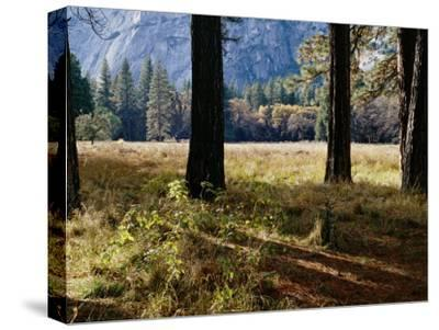 Tree Trunks in a Mountain Meadow-Marc Moritsch-Stretched Canvas Print