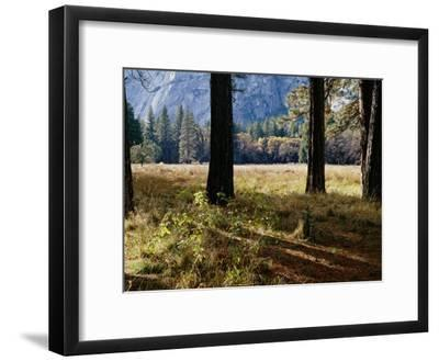 Tree Trunks in a Mountain Meadow-Marc Moritsch-Framed Photographic Print