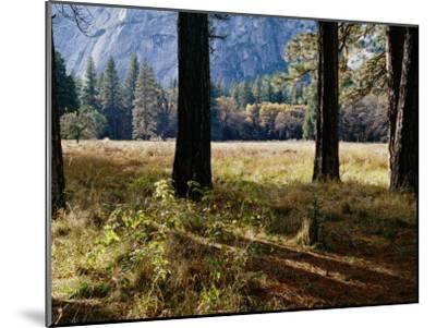 Tree Trunks in a Mountain Meadow-Marc Moritsch-Mounted Photographic Print