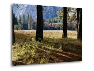 Tree Trunks in a Mountain Meadow-Marc Moritsch-Metal Print