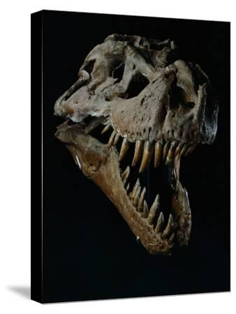 Skull of a Tyrannosaurus Rex-Ira Block-Stretched Canvas Print