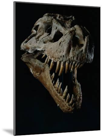 Skull of a Tyrannosaurus Rex-Ira Block-Mounted Photographic Print