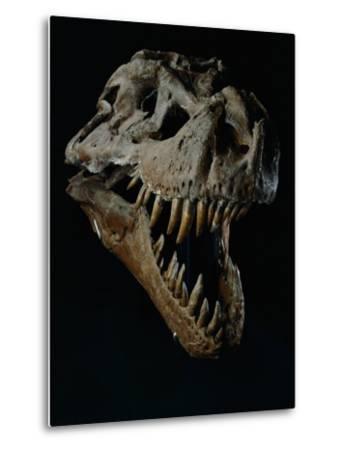 Skull of a Tyrannosaurus Rex-Ira Block-Metal Print