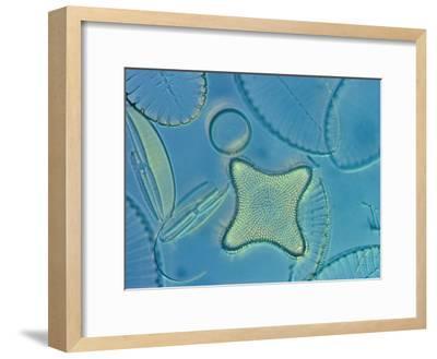 Diatoms-Darlyne A^ Murawski-Framed Photographic Print