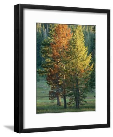 Trees Bearing the Colors of Fall-Raymond Gehman-Framed Photographic Print