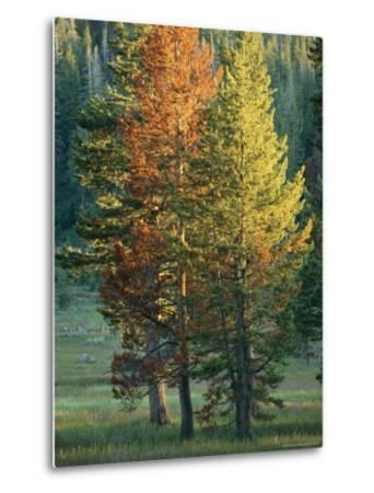 Trees Bearing the Colors of Fall-Raymond Gehman-Metal Print