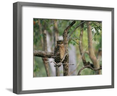 A Brown Fish Owl, Native to India, Perches in a Tree--Framed Photographic Print