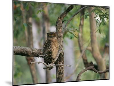 A Brown Fish Owl, Native to India, Perches in a Tree--Mounted Photographic Print