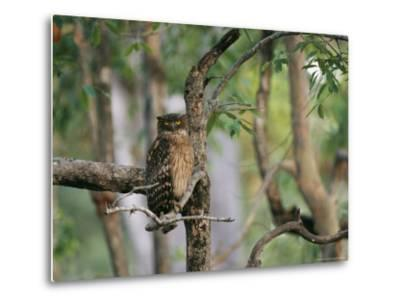 A Brown Fish Owl, Native to India, Perches in a Tree--Metal Print