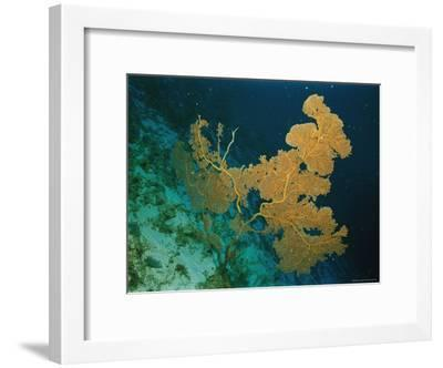 Corals Crowd the Reefs Near Rongelap Atoll-Emory Kristof-Framed Photographic Print