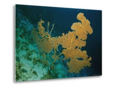Corals Crowd the Reefs Near Rongelap Atoll-Emory Kristof-Metal Print