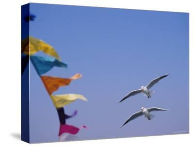 Gulls Fly over Colorful Flags in Bombay-Bill Ellzey-Stretched Canvas Print