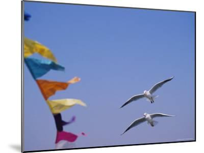 Gulls Fly over Colorful Flags in Bombay-Bill Ellzey-Mounted Photographic Print