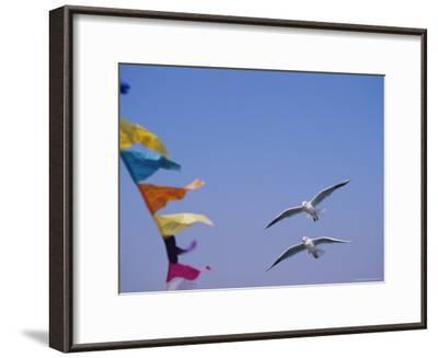 Gulls Fly over Colorful Flags in Bombay-Bill Ellzey-Framed Photographic Print