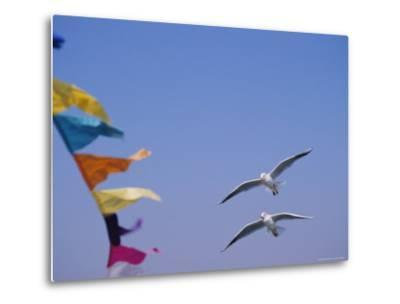 Gulls Fly over Colorful Flags in Bombay-Bill Ellzey-Metal Print
