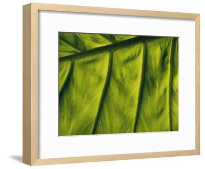 Close View of a Leaf--Framed Photographic Print