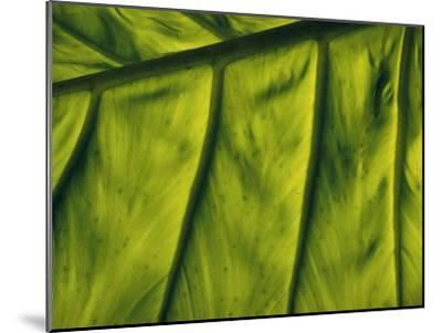 Close View of a Leaf--Mounted Photographic Print