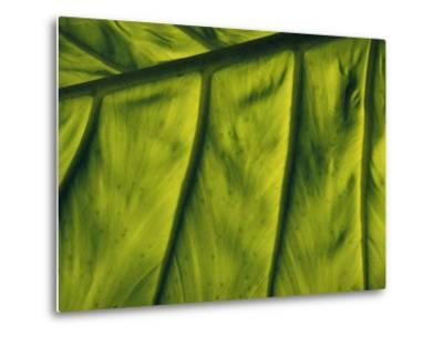 Close View of a Leaf--Metal Print